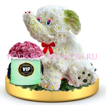 Слон из цветов + розы в шляпной коробке на золотом подносе